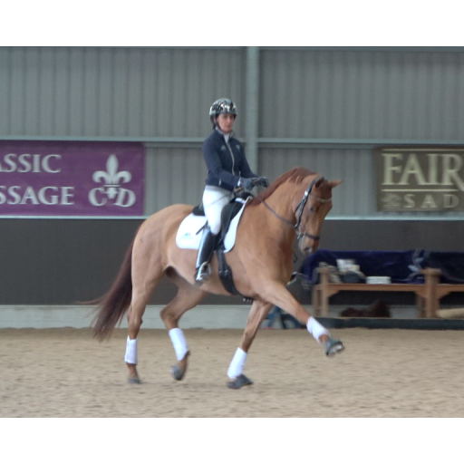 Medium trot training